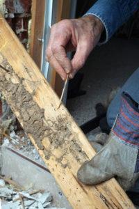 Termite Damage